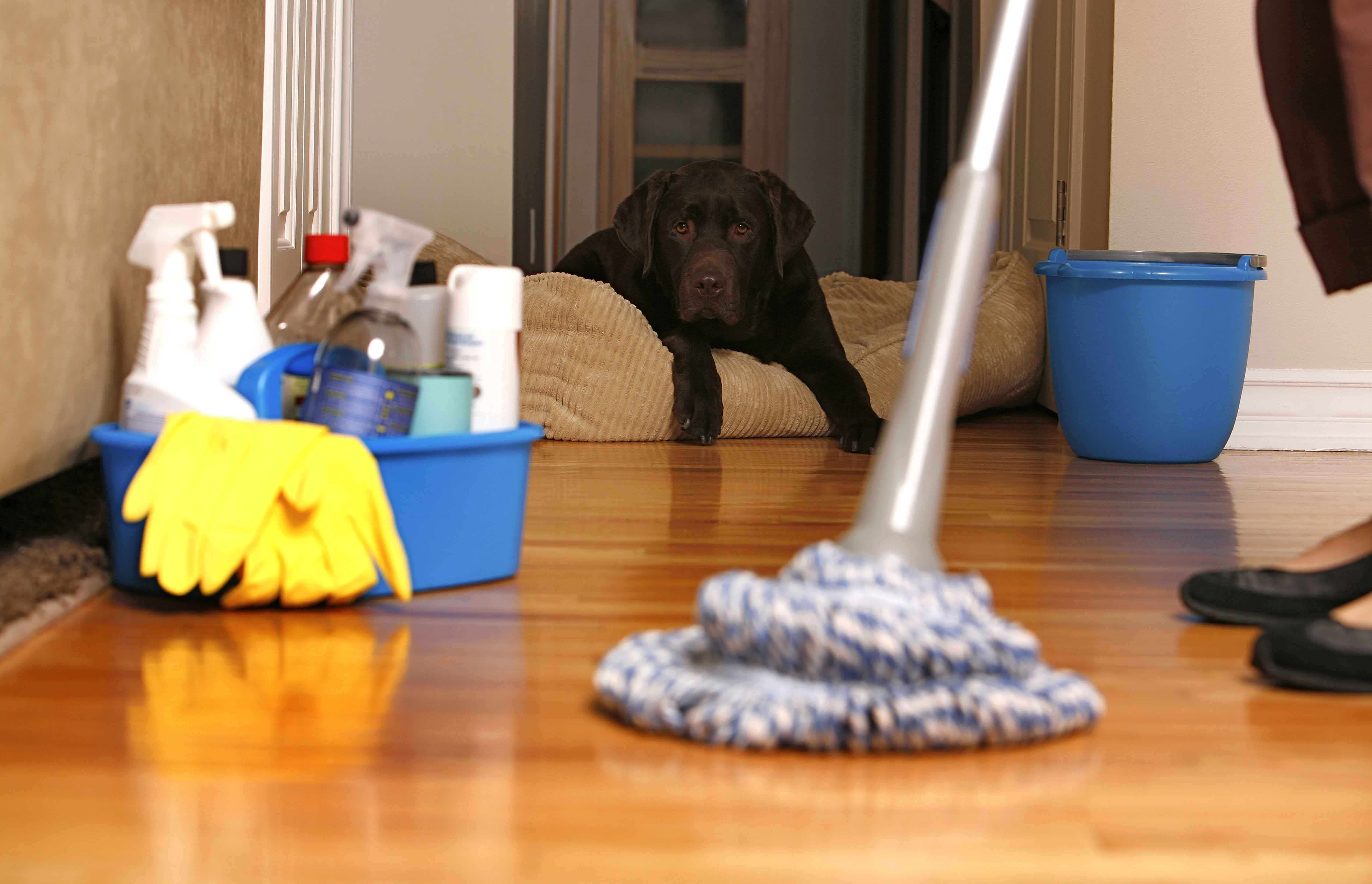 house cleaning dana point